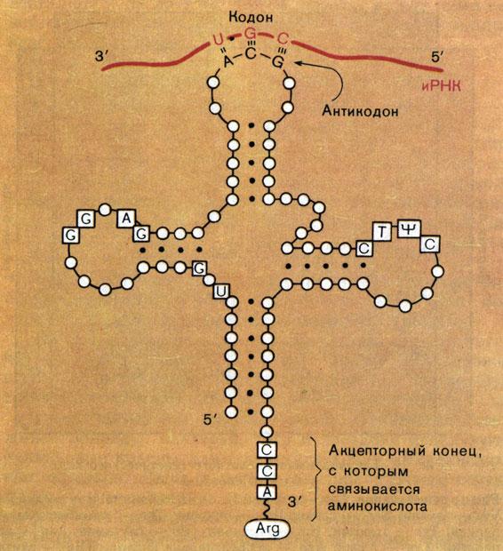 Схема структуры транспортной