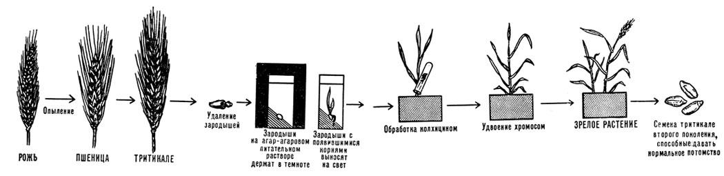 Схема получения искусственного