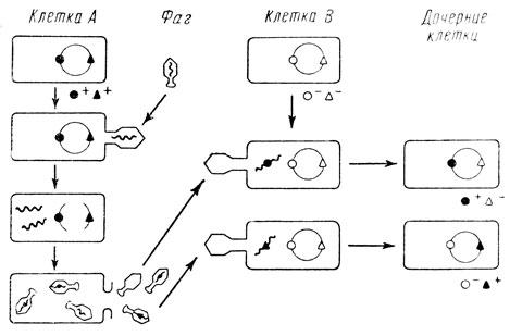 Схема трансдукции [65]