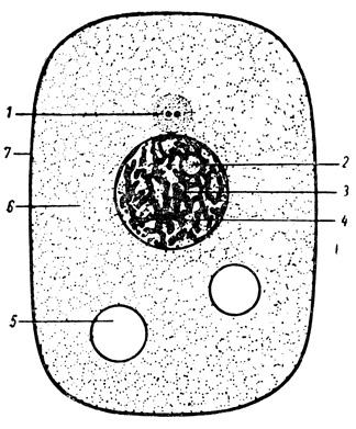 Схема строения клетки по