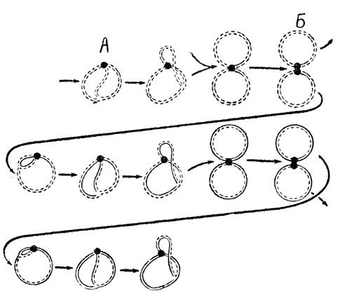 Схема репликации циркулярной